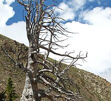 Creepy Dead Tree by Bill Hendricks