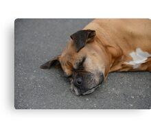 sleeping cute dog Canvas Print