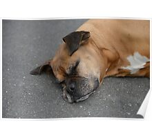 sleeping cute dog Poster