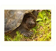 Snapping Turtle Surprise Art Print