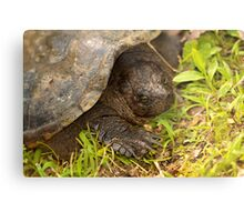 Snapping Turtle Surprise Metal Print