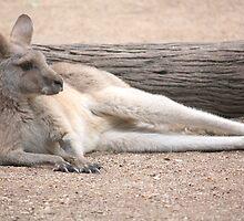 Kangaroo Lazing by Redpopy