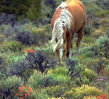 Mountain Meadow  by Jeanne  Nations
