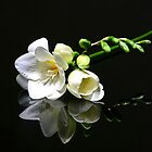 white flower by danapace