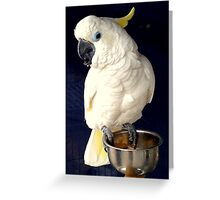 White Cockatoo Rescue Greeting Card