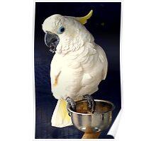White Cockatoo Rescue Poster
