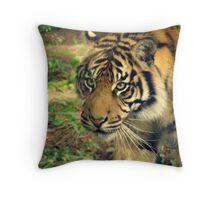 Tiger stalking. Throw Pillow