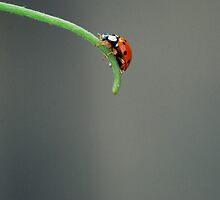 Ladybug by Laura Kalcheff