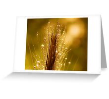 wheat of gold Greeting Card