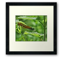 Deep in the Undergrowth. Framed Print