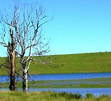 A lake in Gloucester, NSW by geojas