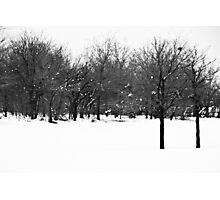 Double Tree Photographic Print