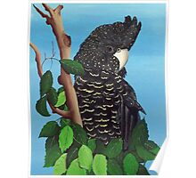 RED TAILED BLACK COCKATOO ON NOTEBOOK Poster