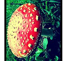 Amanita muscaria by pixies000