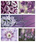 Collection ~ Purple Flowers by Anne Staub