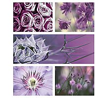 Collection ~ Purple Flowers Photographic Print