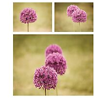 Alliums Photographic Print