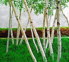 A Grove of Birches 3 by Tom  Reynen