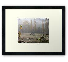 Equine Sublime Framed Print