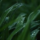 After the Rain by amaniacadored