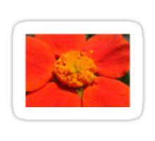 orange macro Sticker