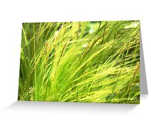 Painting the Wildgrass Greeting Card