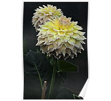 Glowing Yellow Dahlia Flower Poster