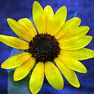 Textured Sunflower by Stormygirl