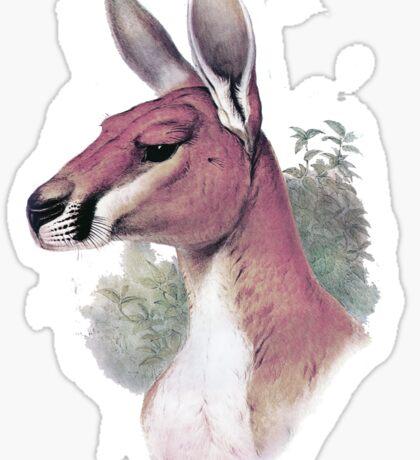 Red kangaroo portrait Sticker