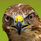 I See You! by Geoff Carpenter