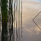Reeds in a Lake by John Quixley