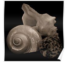 Sepia Shells Poster
