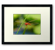 Dragonfly on Blade of Grass Framed Print