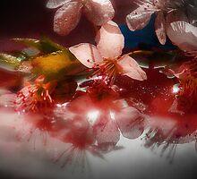 Unexpected by Danuta Antas