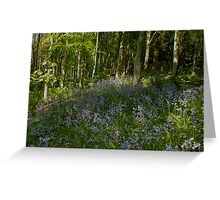 Patch of Bluebells Greeting Card