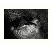 Eye of a Gaur Art Print