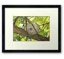 Wasp's Nest Framed Print
