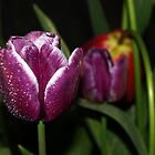 Rainy Day Tulip by saxonfenken
