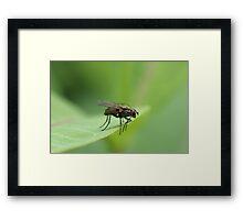 Fly on Leaf  Framed Print