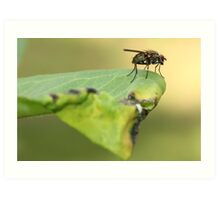 Fly on Leaf Art Print
