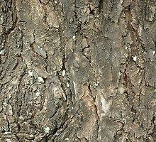tree bark by bayu harsa