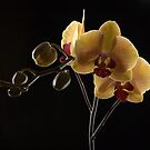 yellow orchids by purpleminx