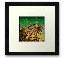 Autumm in the Air Framed Print
