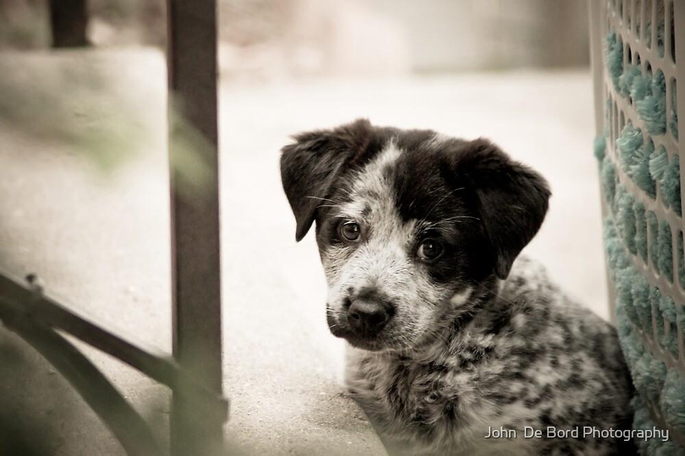 Sad Puppy Eyes by John  De Bord Photography