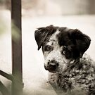 Sad Puppy Eyes by John  De Bord Photography