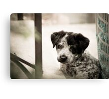 Sad Puppy Eyes Canvas Print