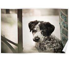 Sad Puppy Eyes Poster