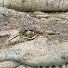Crocodile's eye by crazybeakz