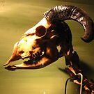 Animal to the bone by crazybeakz