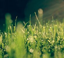 Wet Grass by Jenn Kellar